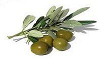 tn_Olive1