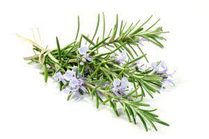 Rosemary Fused Ultra-Premium Olive Oil