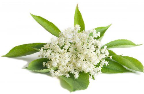 Elder Flower White Balsamic